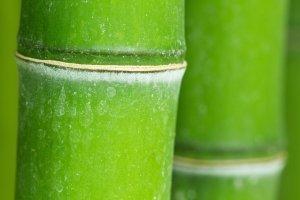 Green bamboo- macro </p srcset=